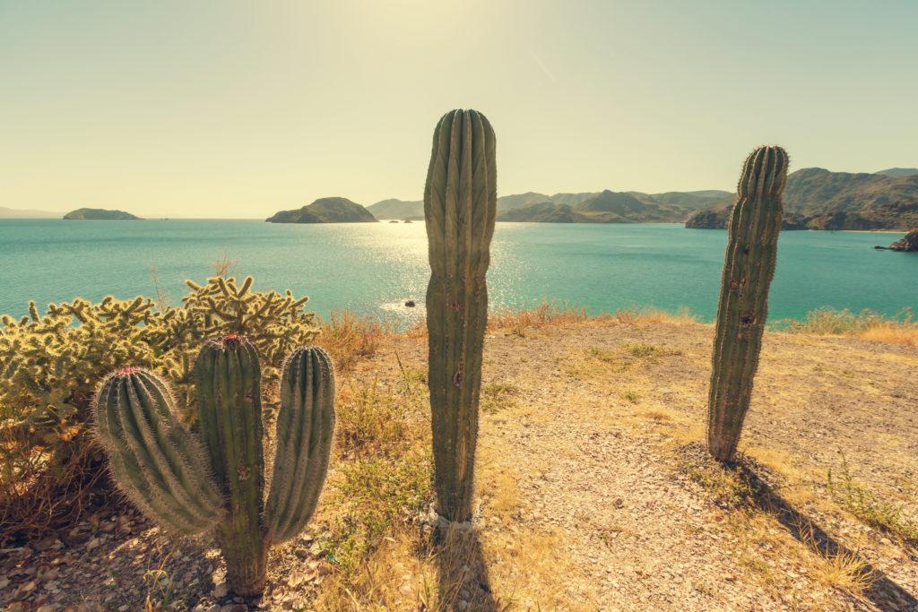 Winter Travel | Baja Mexico